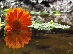 grafimx fiore arancio