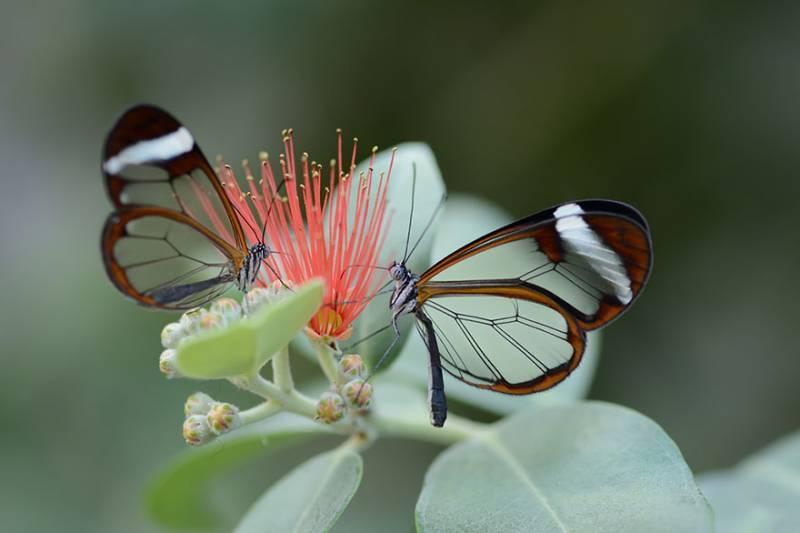 come si sovrappongono le ali di una farfalla: per simmetria assiale o per rotazione?